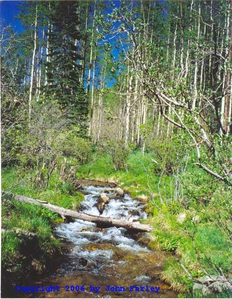 Big Tesuque Creek Santa Fe National Forest Nm